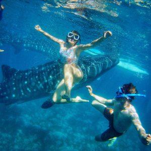 Walhai Schwimmen Mut Angst Anna