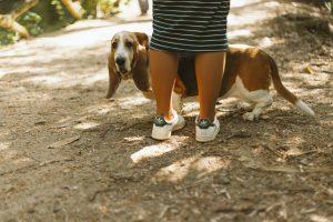 Faul gassi gehen spazieren hund