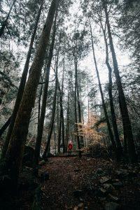Wald gehmeditation